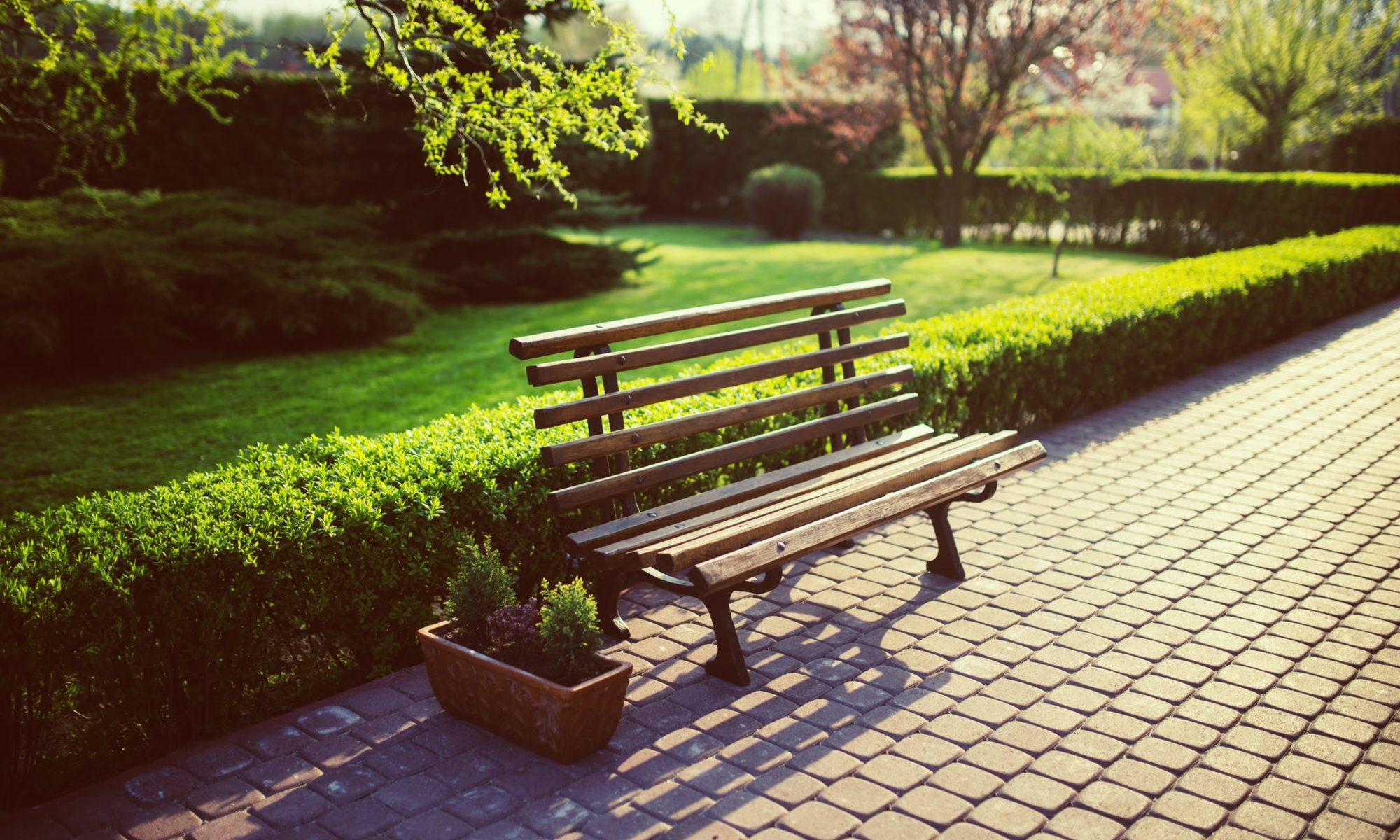 Bench Sitting in a Landscaped Garden