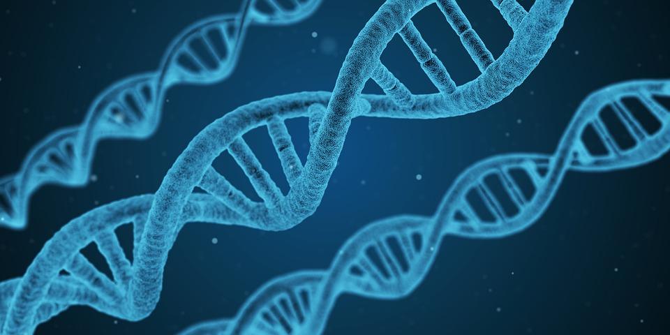 Biochemistry string of DNA