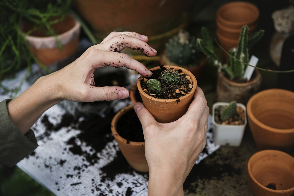 Gardening tips for small spaces